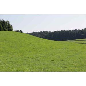 Bio Dauerwiese Saatgut Semo-Bio - Inhalt 1kg